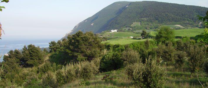 Conero da Ancona